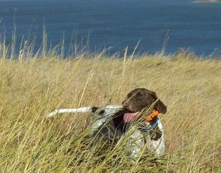 Hunting dog with bird